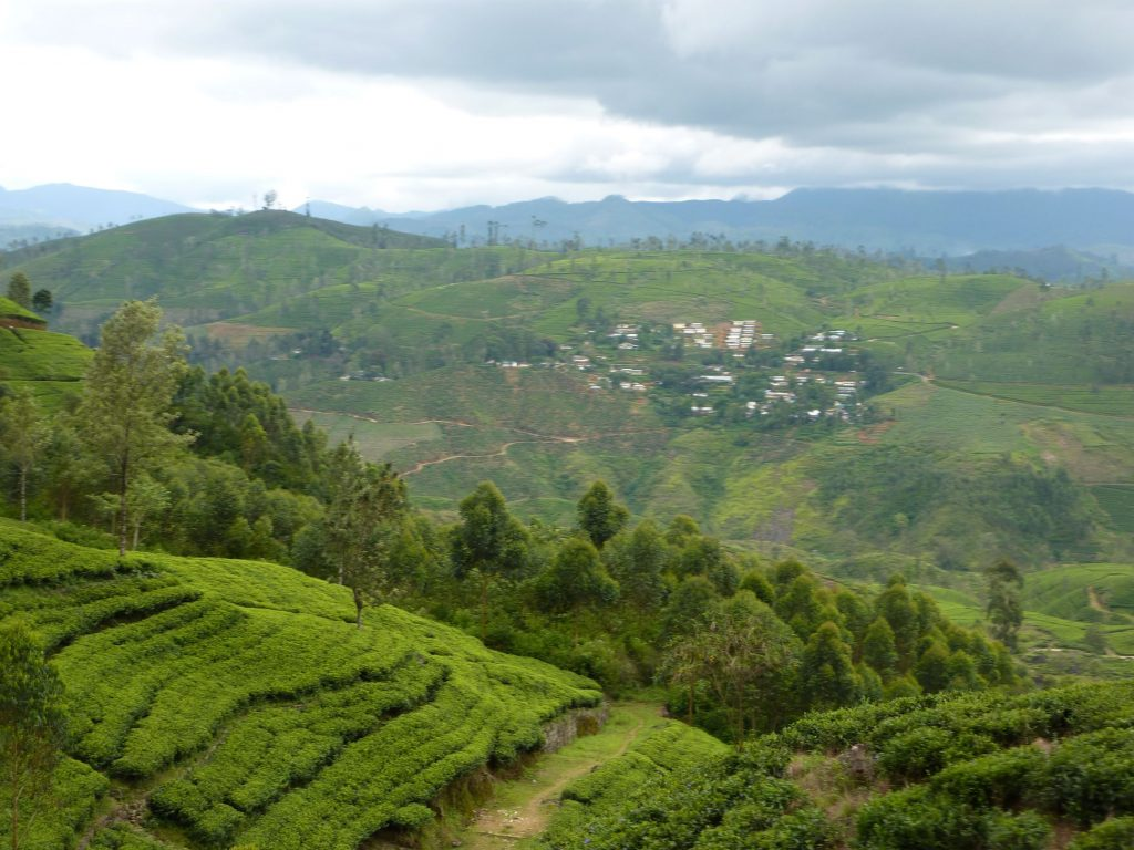 More scenic views around Nuwara Eliya