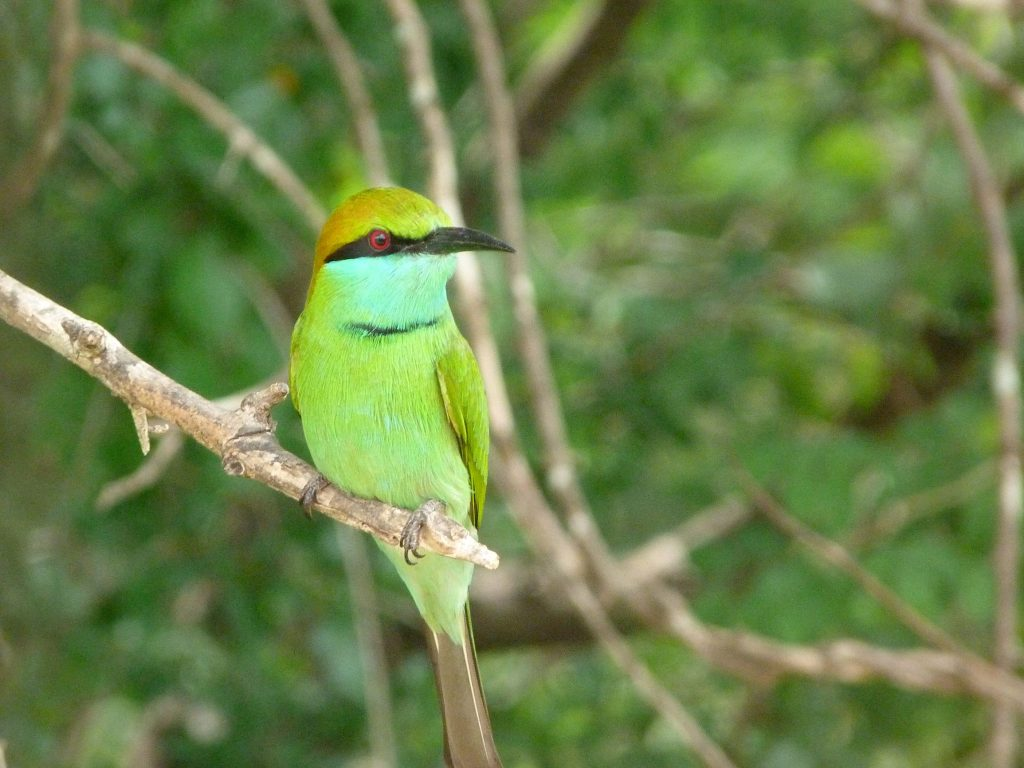 Strikingly beautiful colours of the bee eater