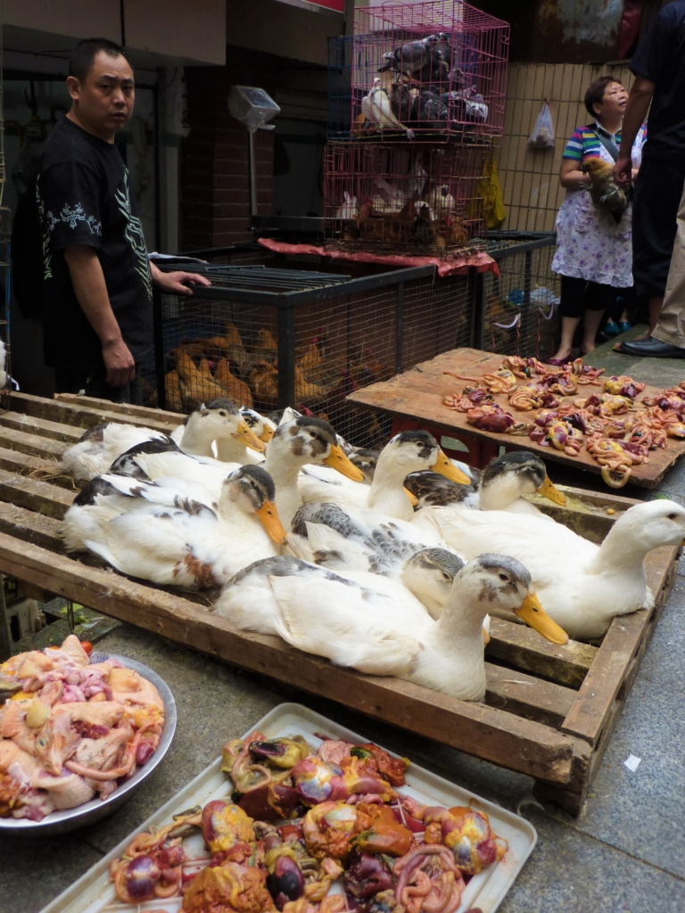 Unidentified animal parts in Chengdu