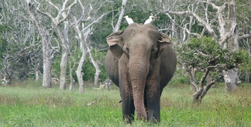 All you need to know about a Yala National Park safari with kids 6