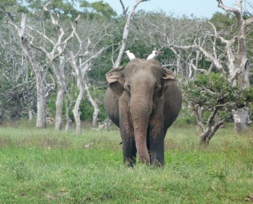 Yala National Park | Your Complete Yala Safari Guide 4