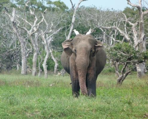 Yala National Park | Your Complete Yala Safari Guide 5