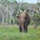 Yala National Park | Your Complete Yala Safari Guide 1