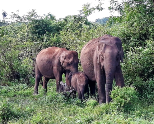 A Half Day Udawalawe National Park Safari with Kids 3