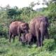 A Half Day Udawalawe National Park Safari with Kids 5
