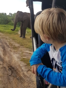 The boys were happy to sit an watch the elephants for ages, observing their movements and mannerisms.