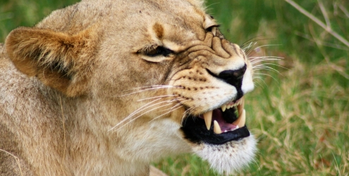 7 Top tips for spotting wildlife on safari 6