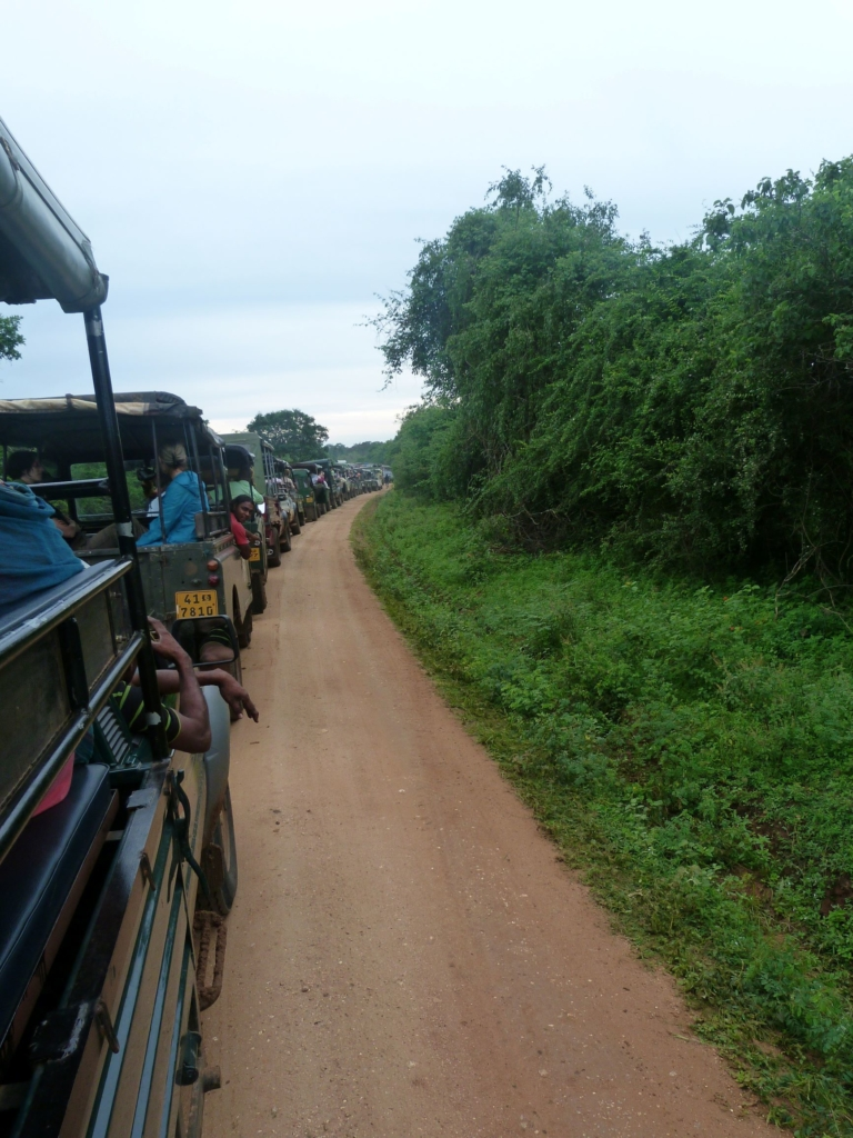 Queues and queues of jeeps jostling for a sighting of an elusive leopard