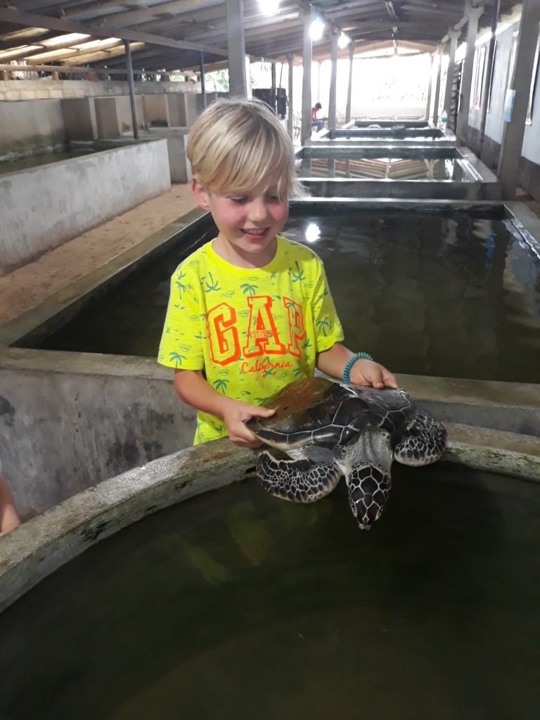 A visit around the Koggala turtle hatchery