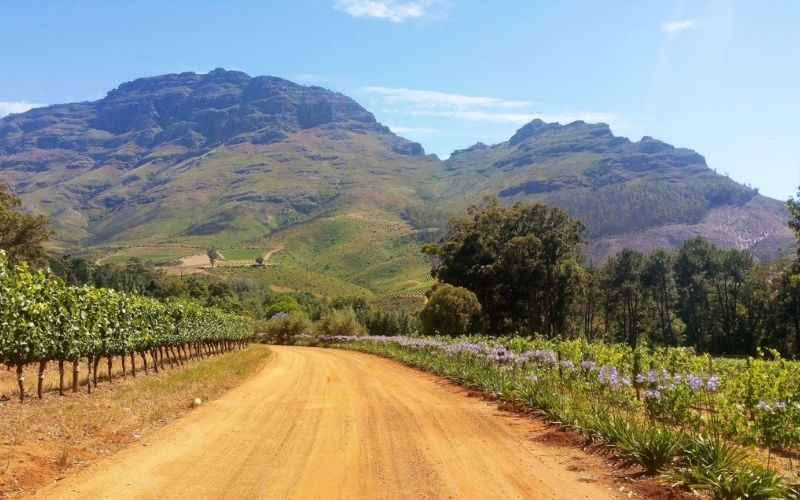 Beautiful scenery in Stellenbosch