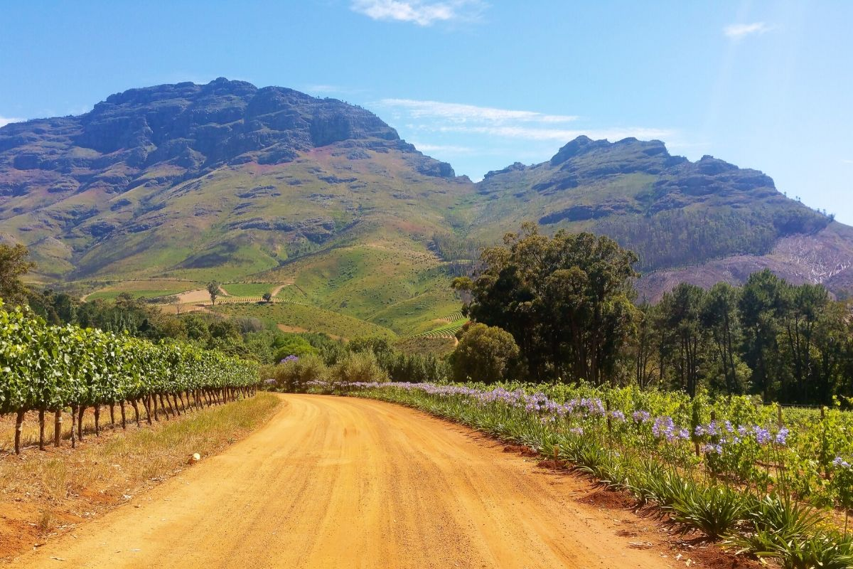Beautiful scenery of the South African winelands