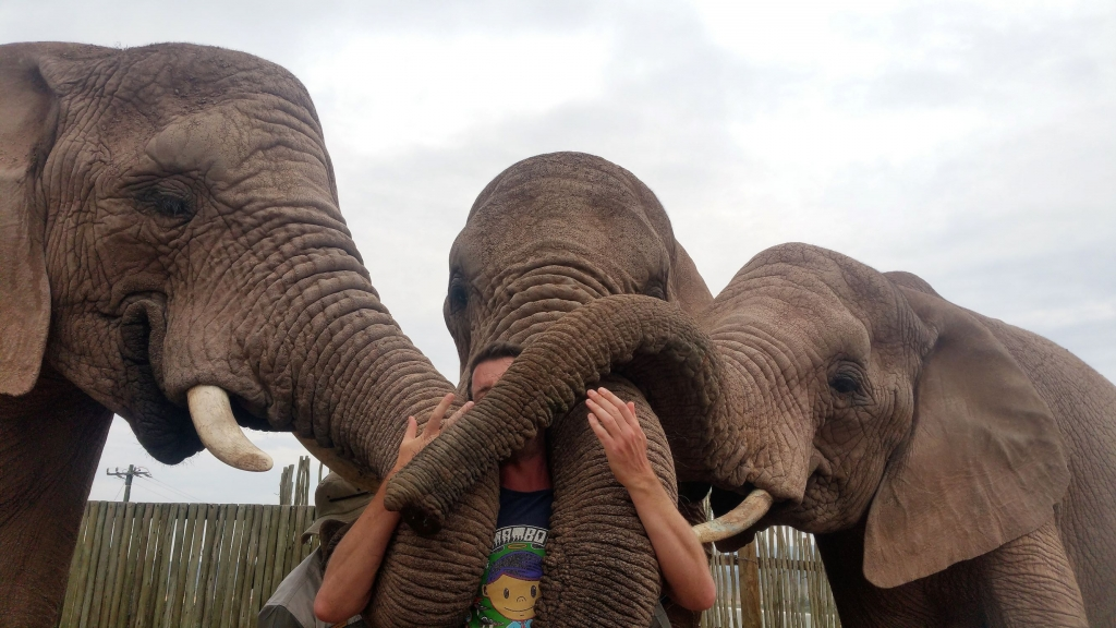 Elephant cuddles at Buffelsdrift