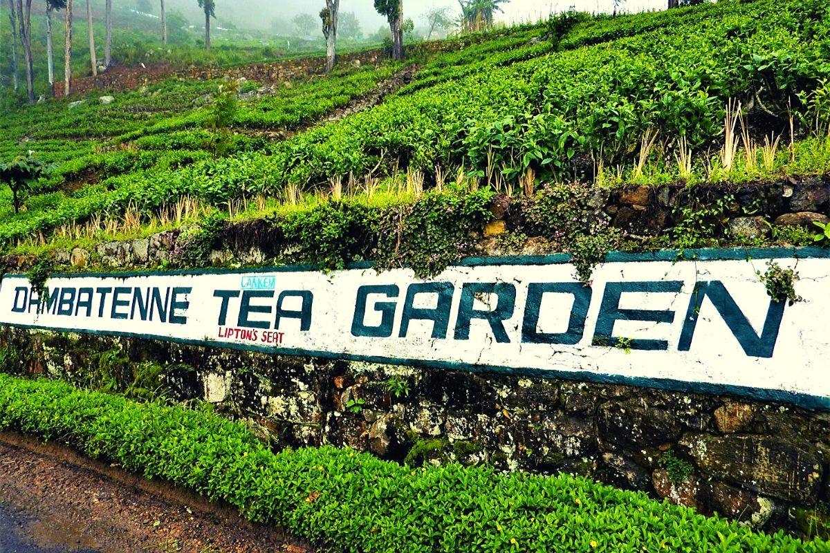 The ultimate of tea plantations in Sri Lanka - Dambetenne Tea Factory
