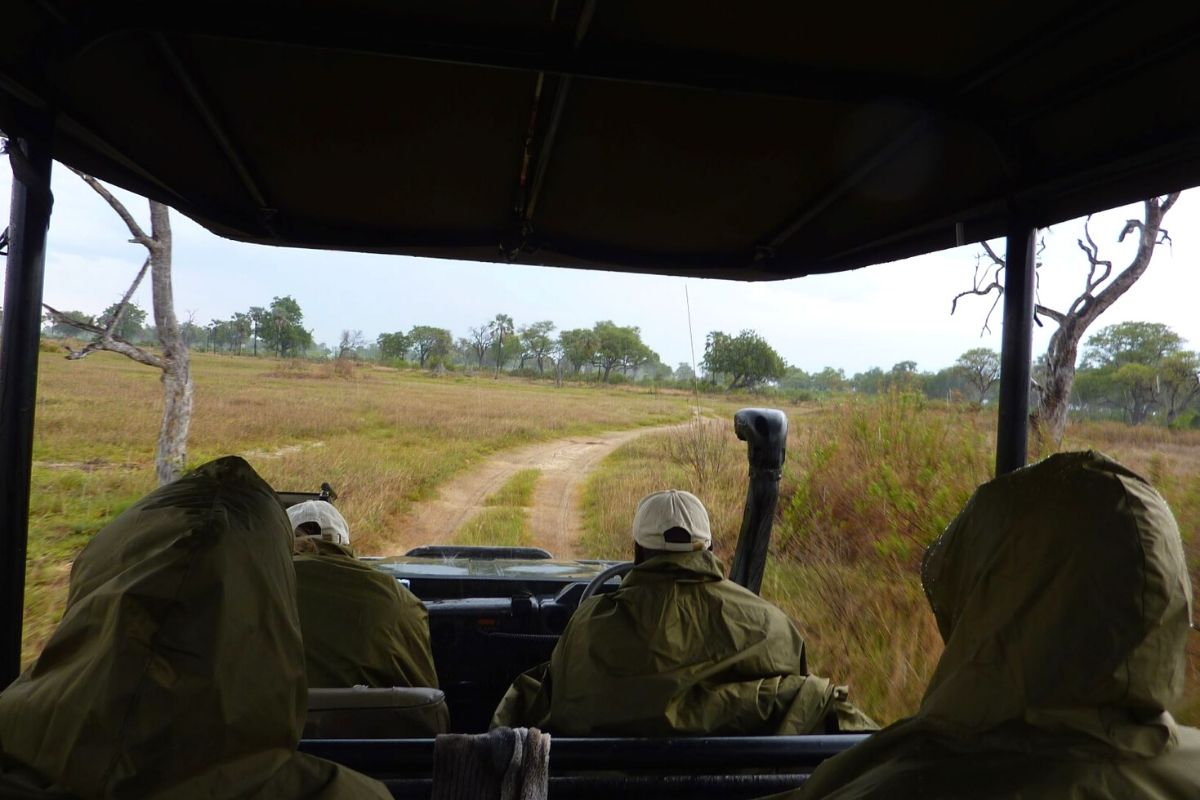 Rain on safari