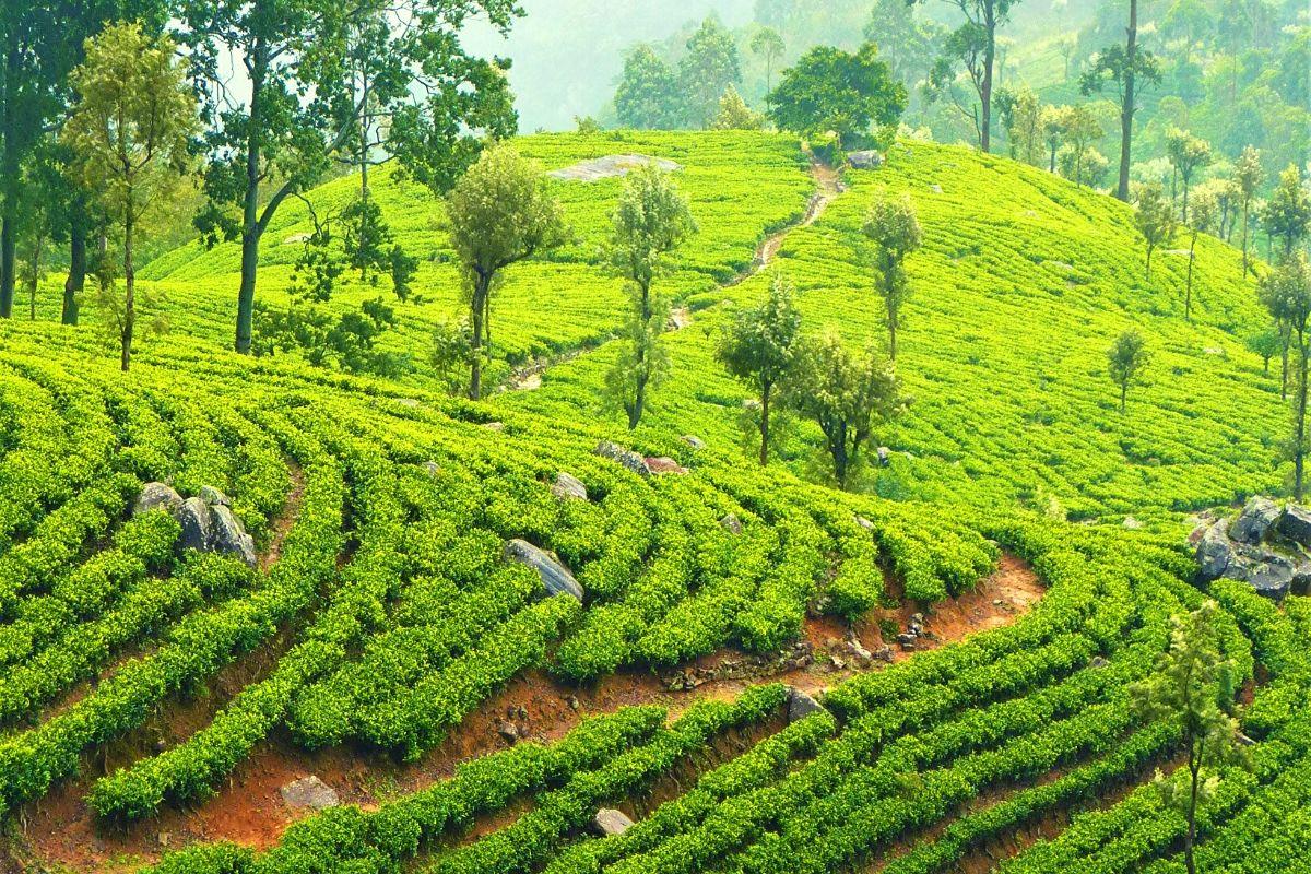 Rolling green hills of Nuwara Eliya
