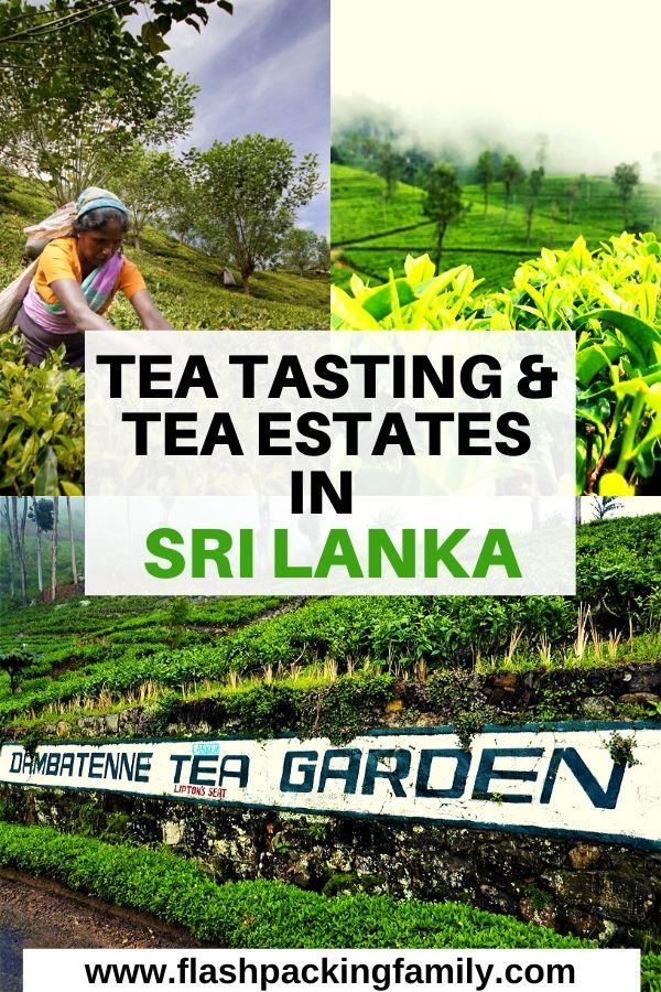 Tea Tasting and Tea Estates in Sri Lanka
