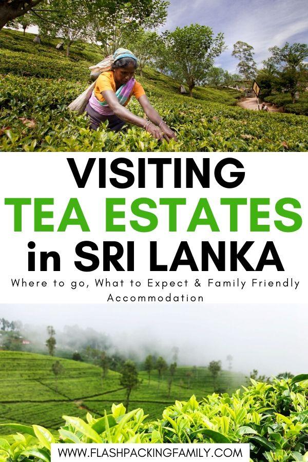 Visiting Tea Estates in Sri Lanka
