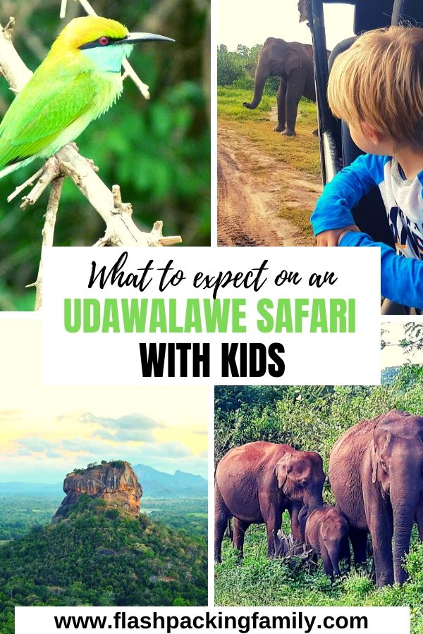What to expect on an Udawalawe safari with kids