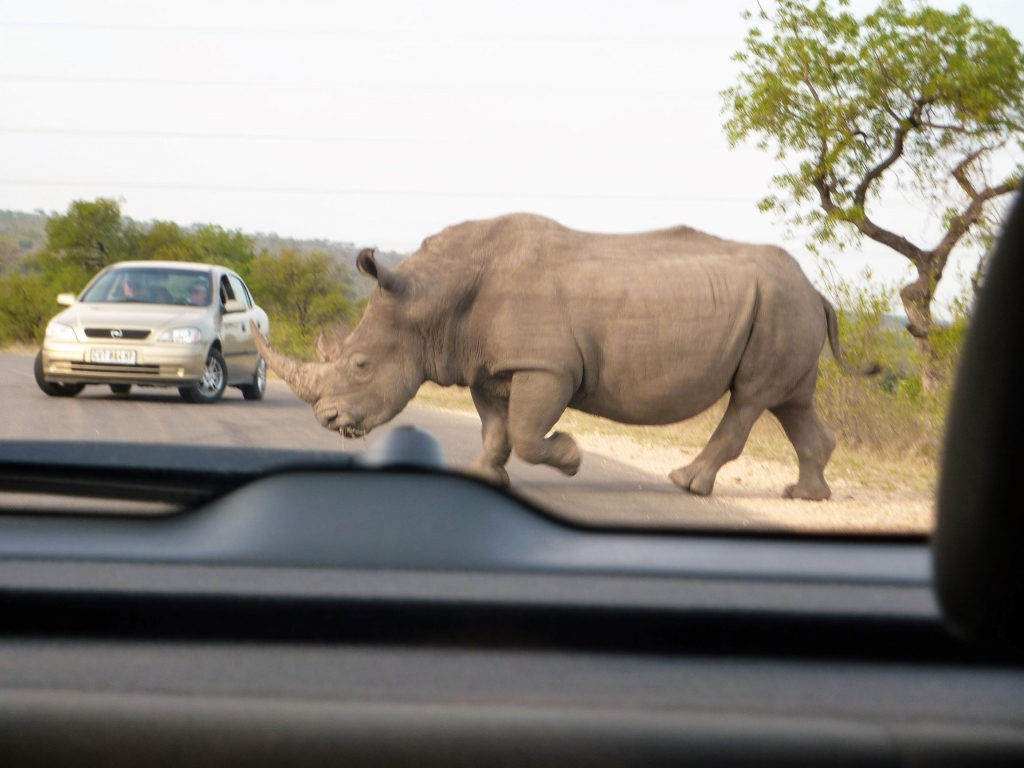 Our close encounter with a rhino in the Kruger