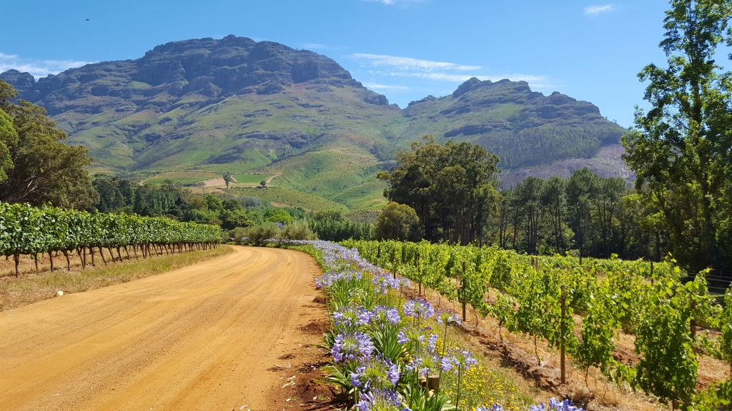 The beautiful scenery of the Stellenbosch wine region