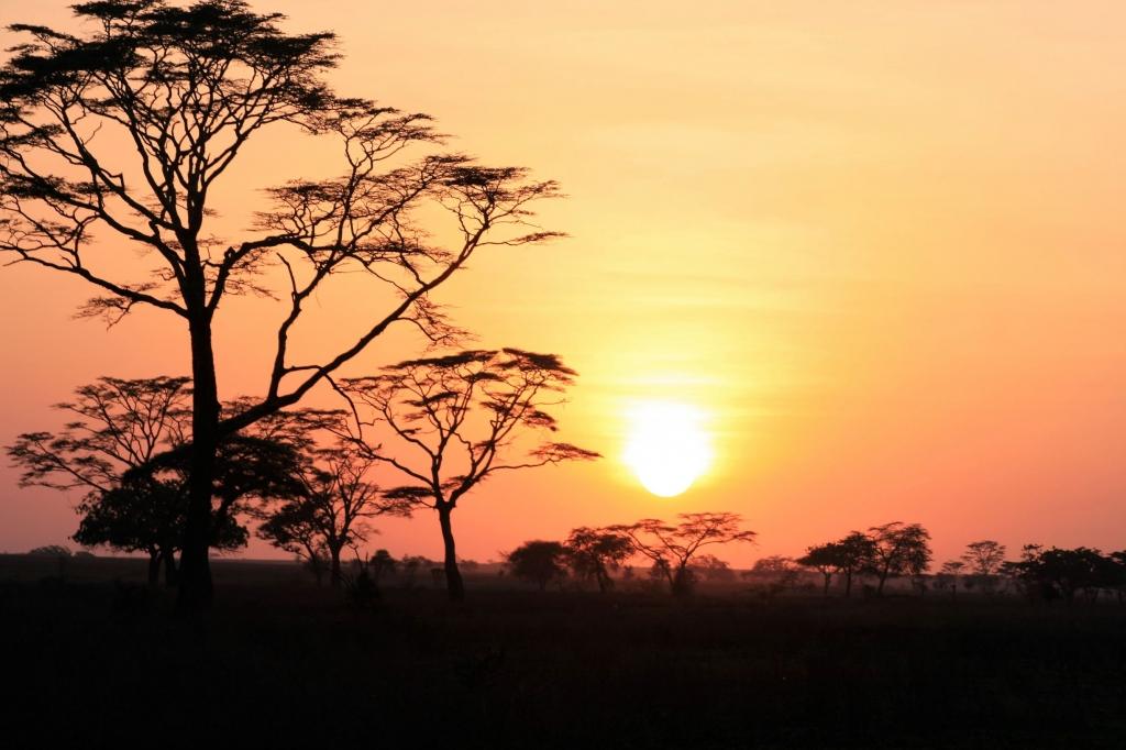 Sunrise over the Serengeti during a morning safari