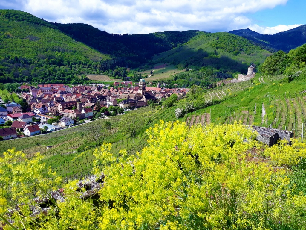 Views of Kayersberg from up in the surrounding vineyards