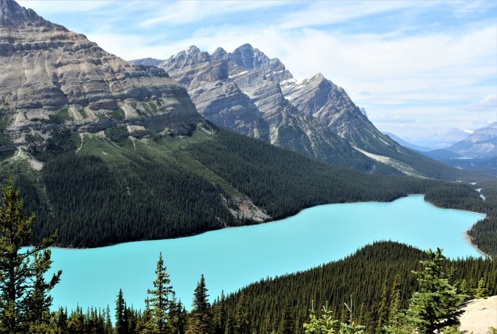 Views over Peyto Lake in Banff National Park from the viewpoint