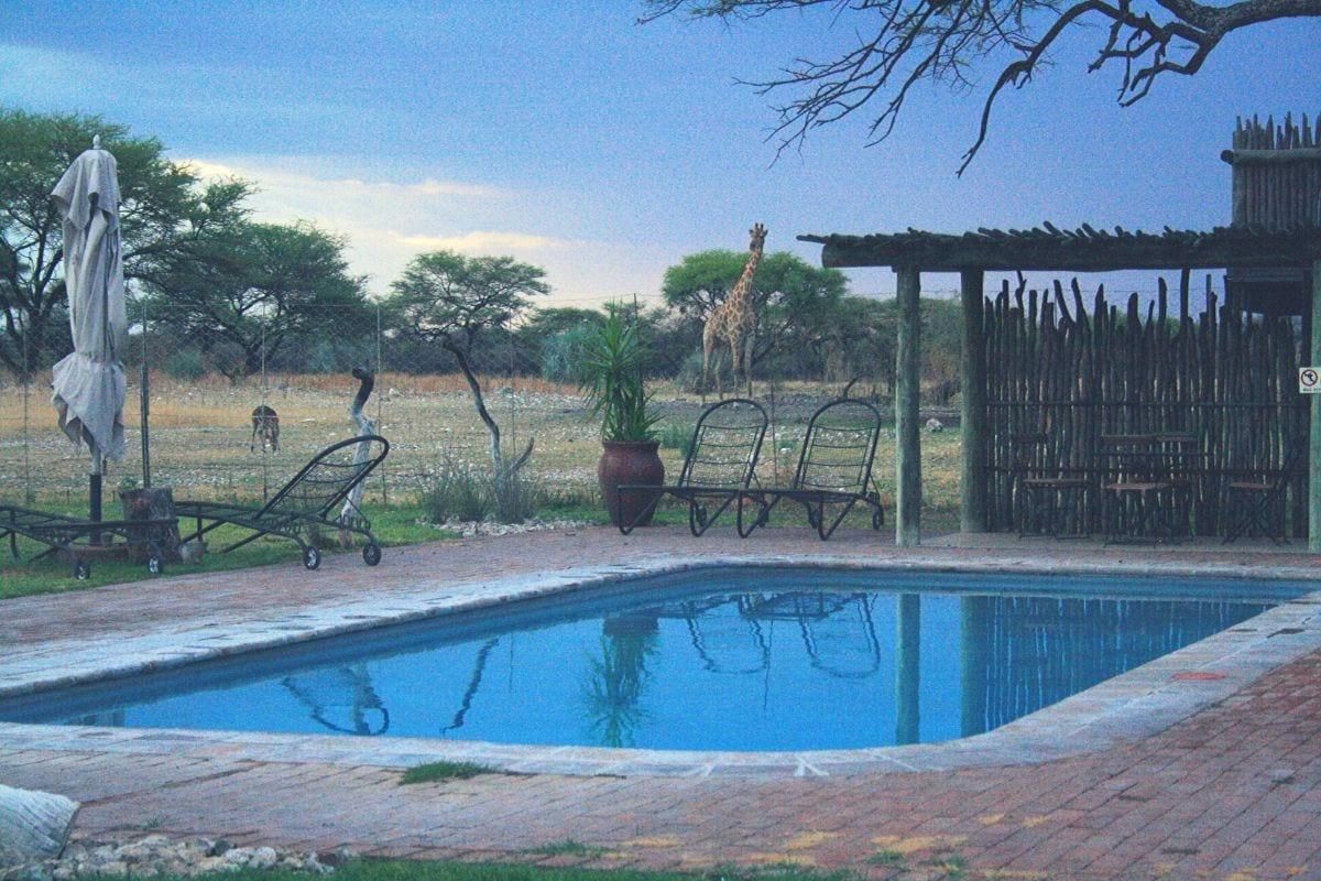 Onguma Bush Camp in Etosha