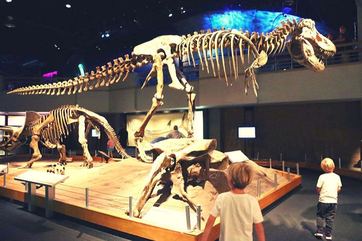 Dinosaur display at the Royal Tyrrell Museum