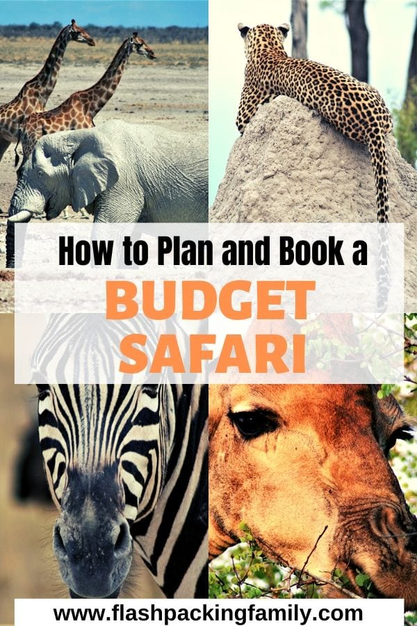 how to plan and book a budget safari