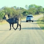 self drive safari in Kruger National Park