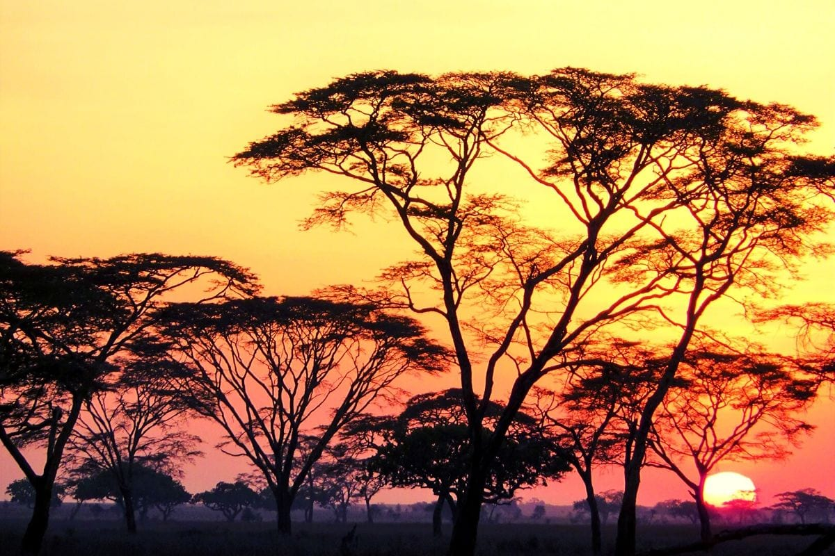 African safari sunrise