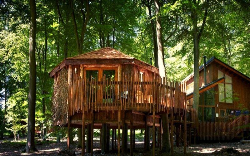 Forest Holidays Blackwood Forest treehouse accommodation.