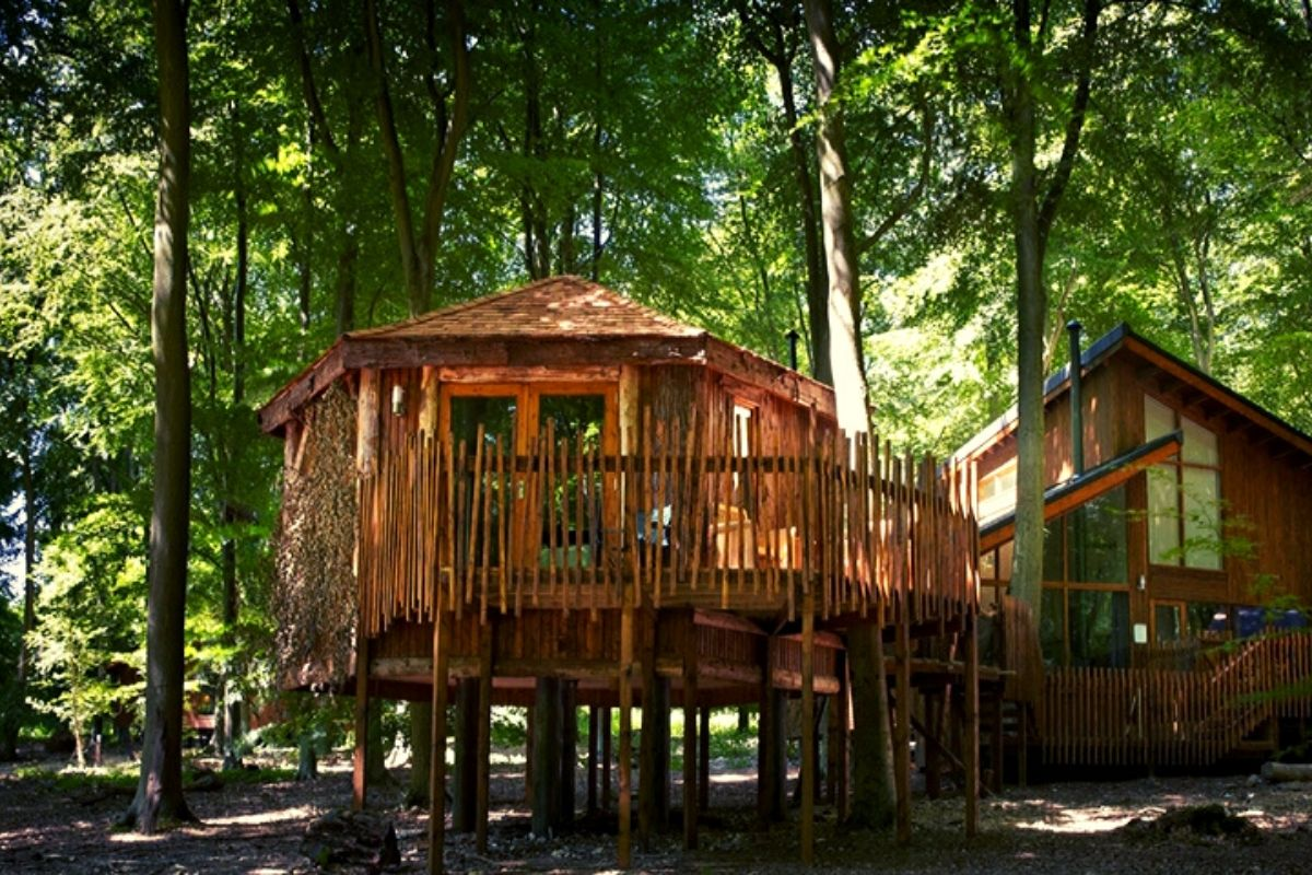 Forest Holidays Blackwood Forest treehouse