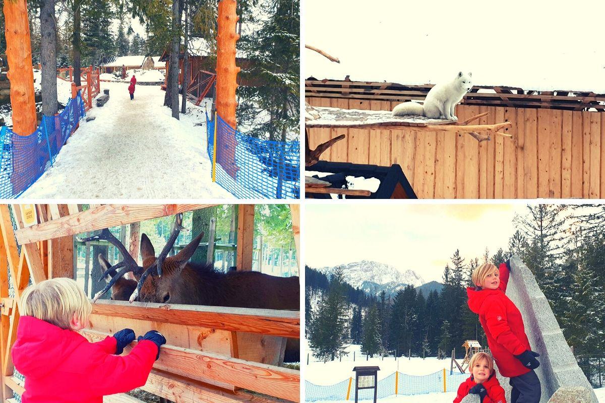 Mini Zoo at Snowlandia Zakopane