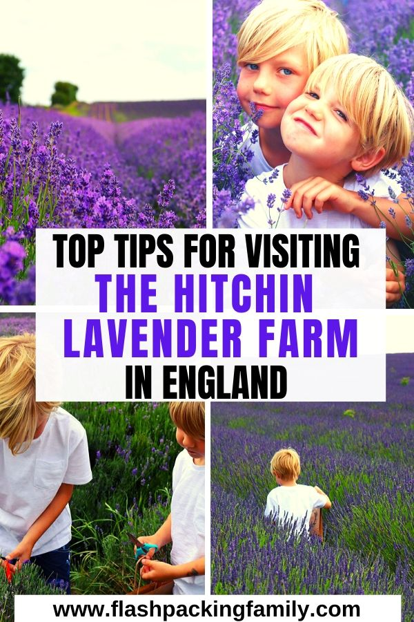 Top tips for Visiting the Hitchin Lavender Farm in England