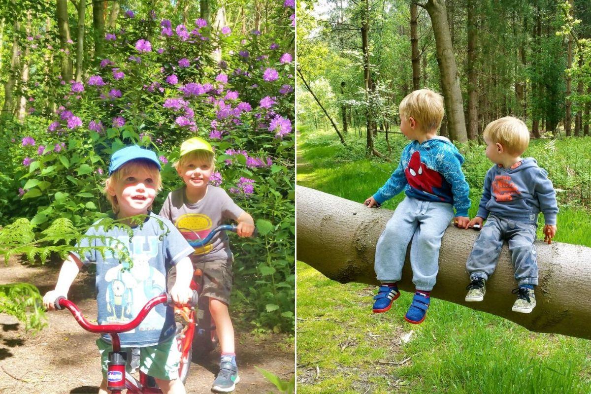 Forest walks with kids in Suffolk