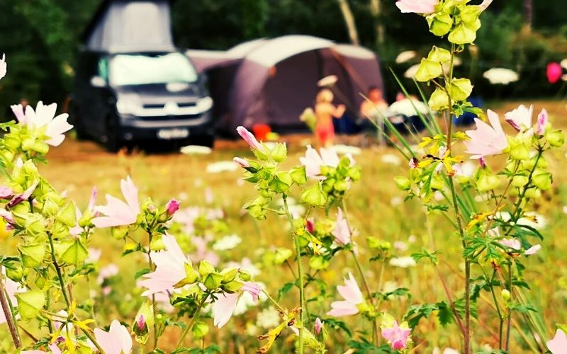 Camping meadow at Domaine de la Besse