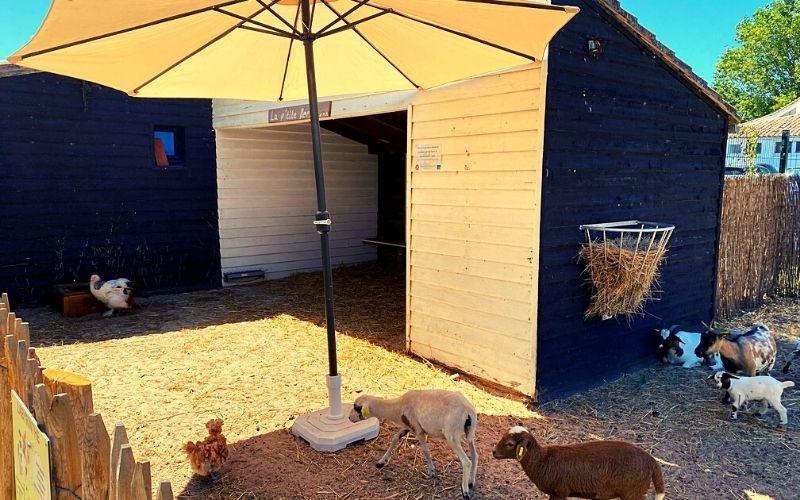 Mini farm at Camping Seasonova Ile de Ré
