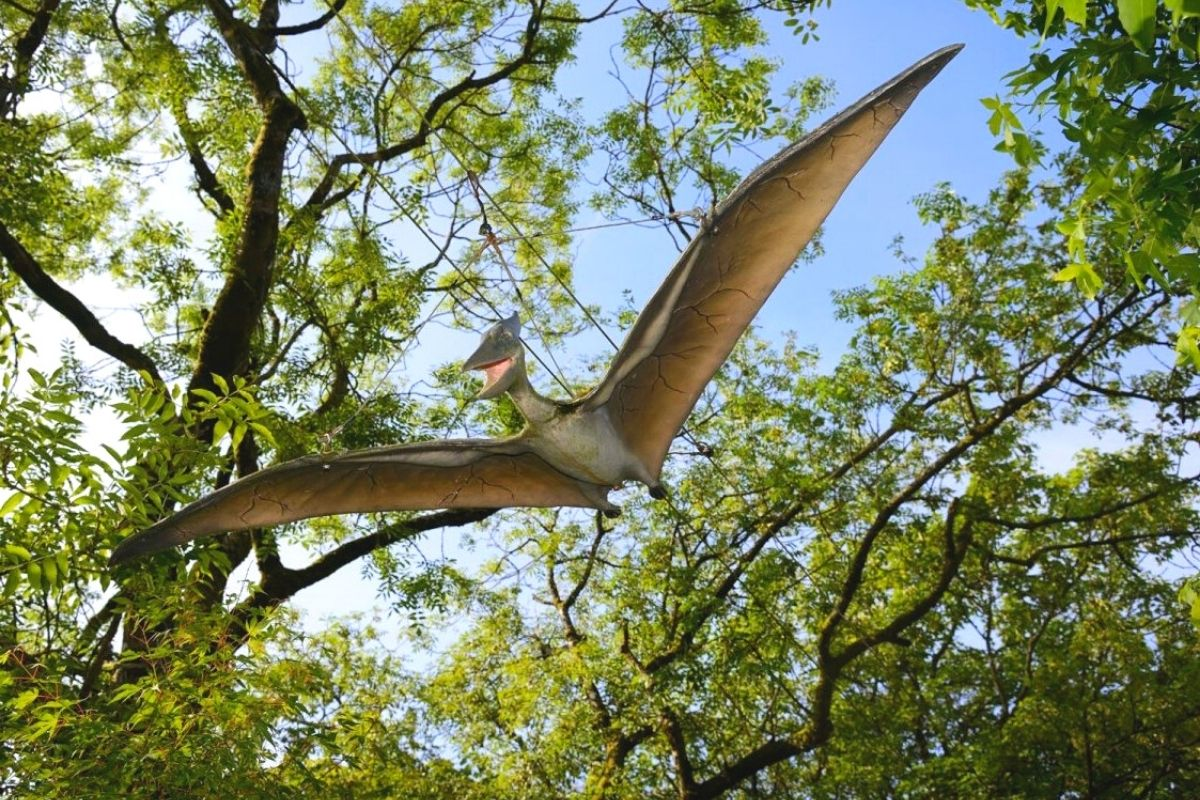 Pteranodon at Dino Park in Dumfries
