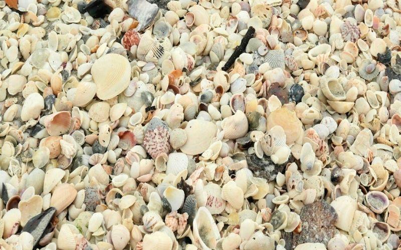 Shells on Bowman's Beach on Sanibel Island