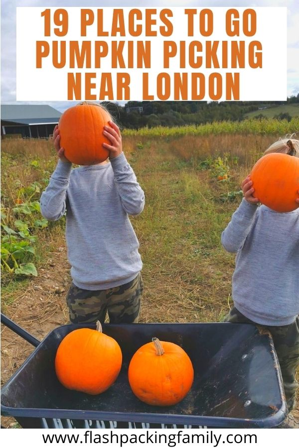 19 Places to go Pumpkin Picking Near London