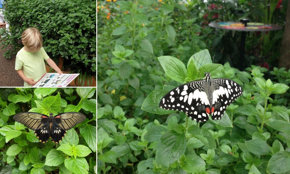 Butterfly House at Whipsnade Zoo