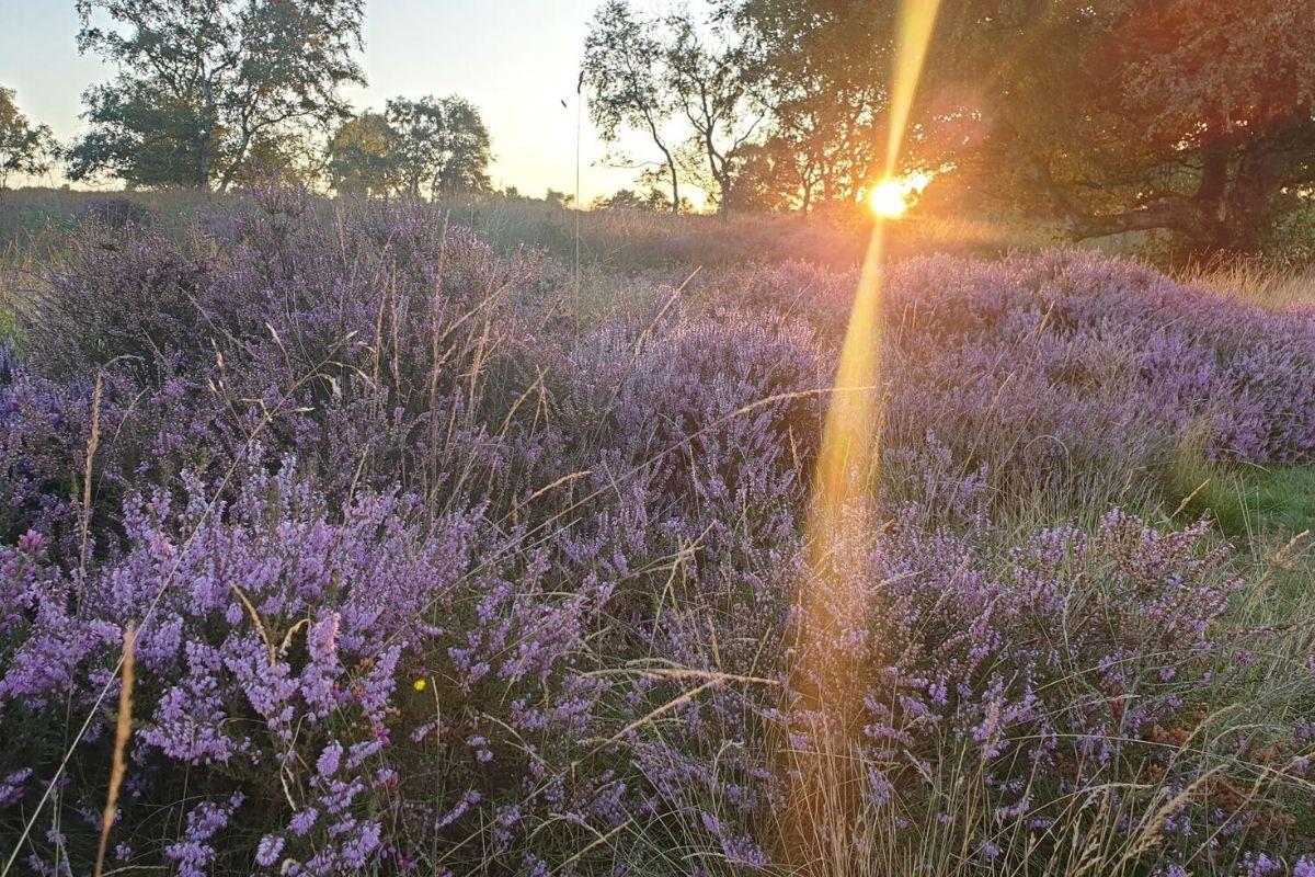 Dunwich heath in Suffolk