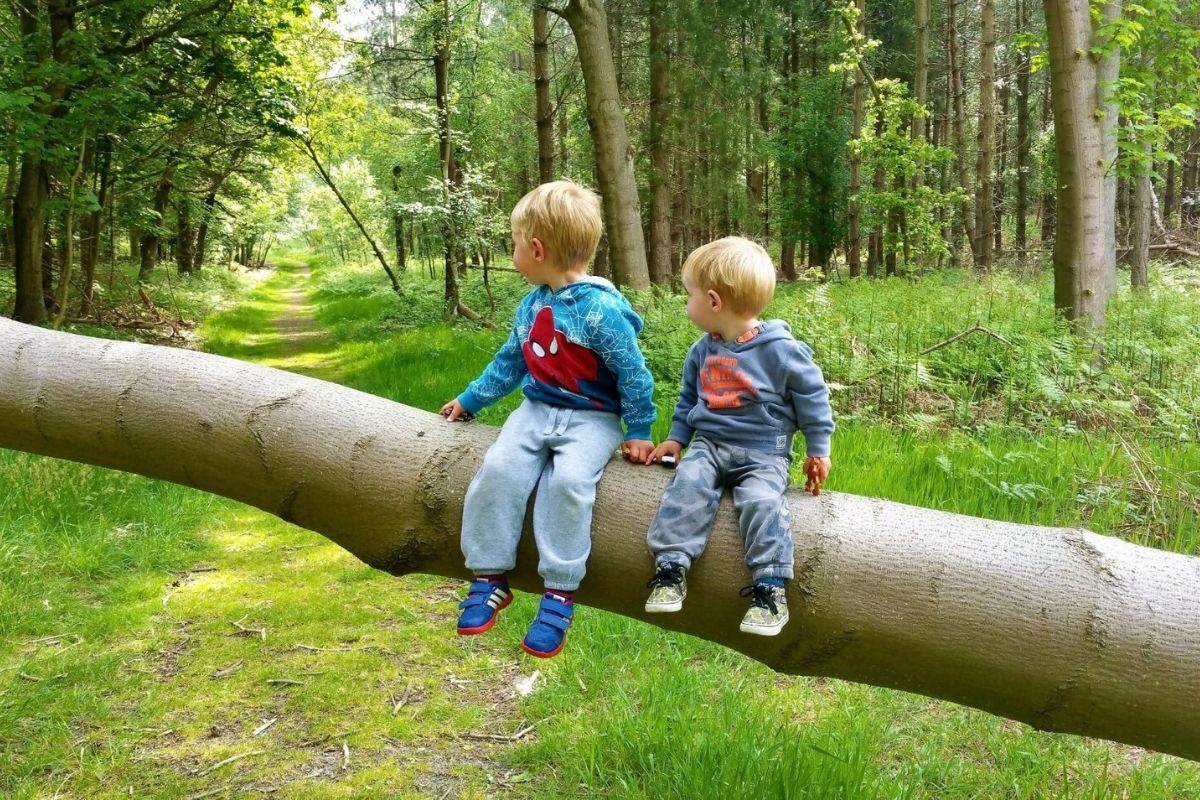 Forest walks in Suffolk with kids