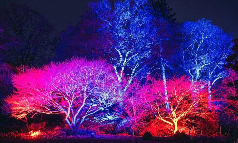 Glow Trail at RHS Wisley