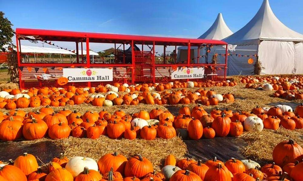 Pumpkin patch at Cammas Hall Farm
