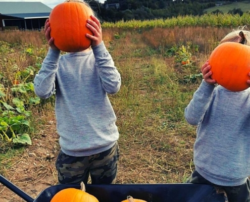 Pumpkin patch at the Pop Up Farm
