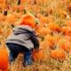 Pumpkin picking with kids