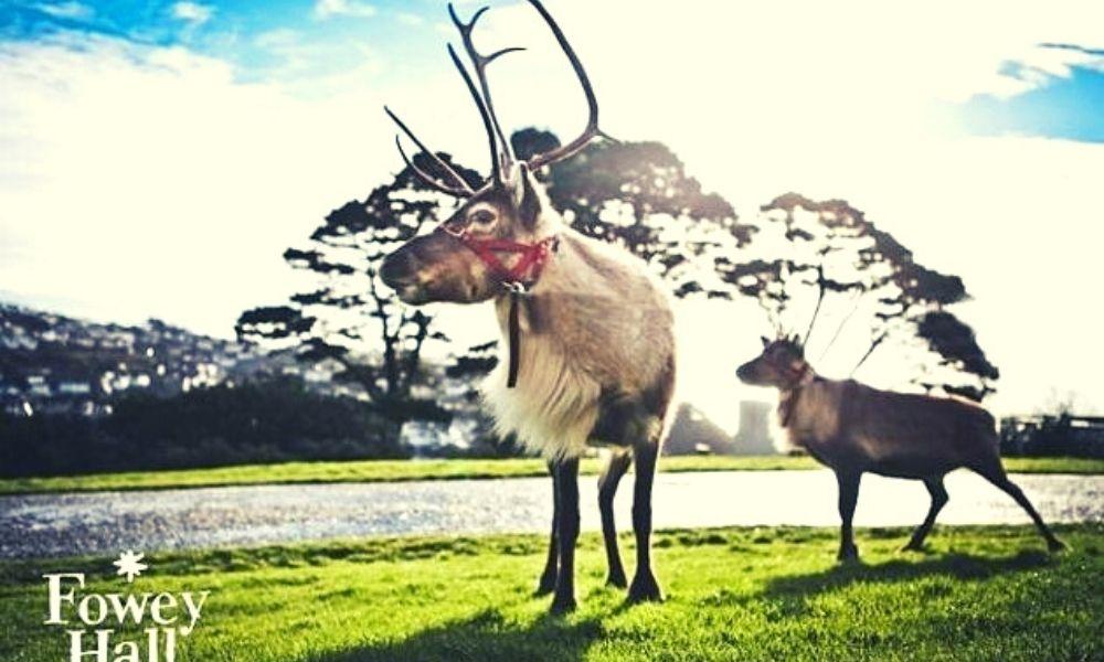 Reindeer at Fowey Hall Hotel